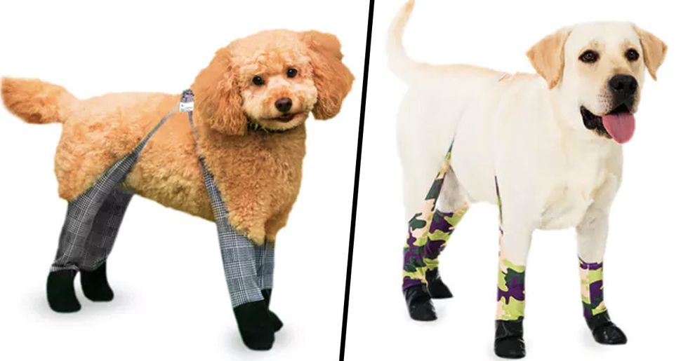 Dog Leggings Are the Perfect Thing to Keep Your Best Friend Warm This Winter