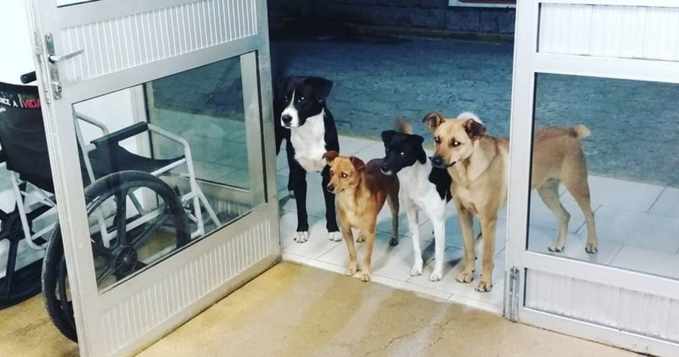 Homeless Man's Dogs Wait At Hospital Door After He Was Admitted