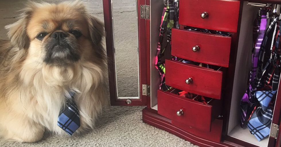 These Pet Owners Go the Extra Mile for Their Furry Family Members