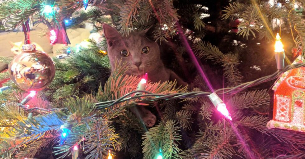 Bet You Can't Spot All the Cats in These Christmas Trees