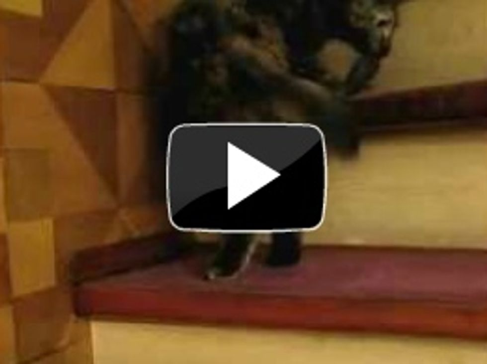 Cat twirls its way up the stairs