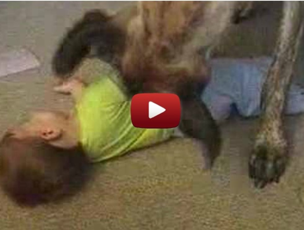 Dog tickling the baby — Cute or scary?