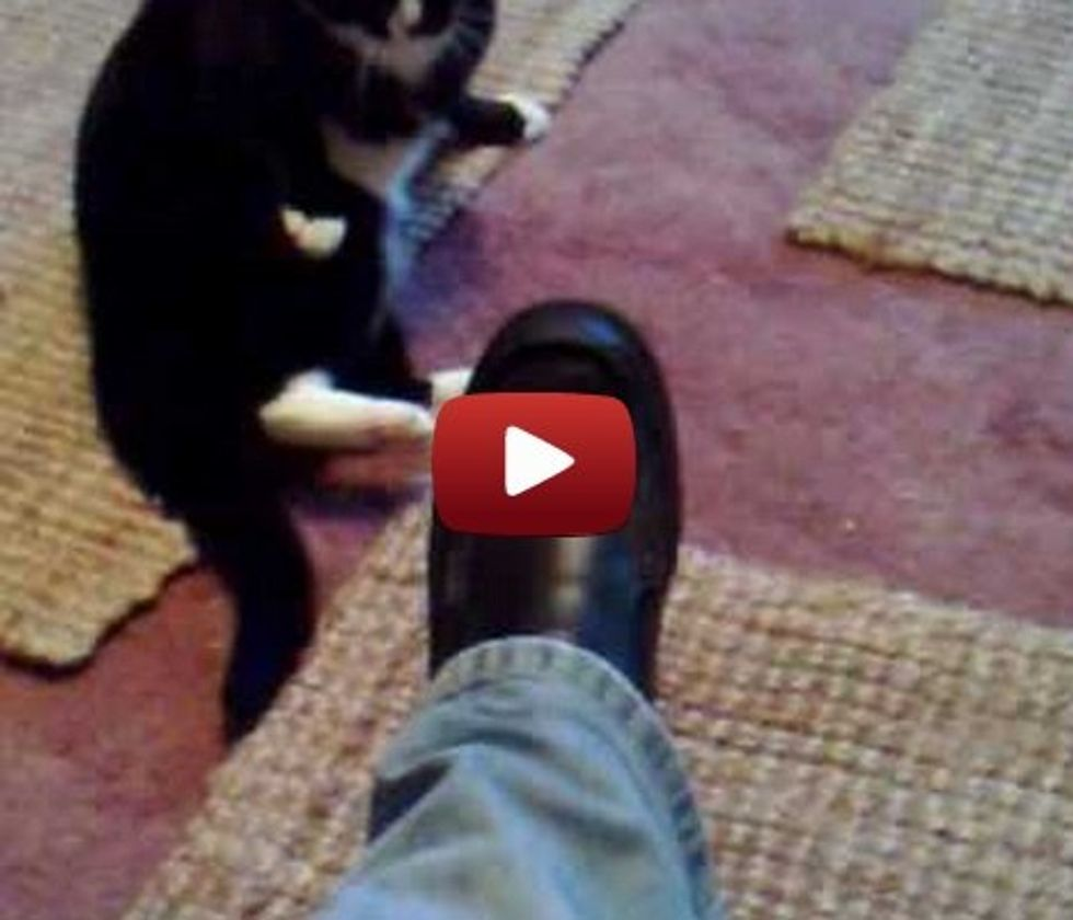 Cat has a brief fistfight with a man's shoe