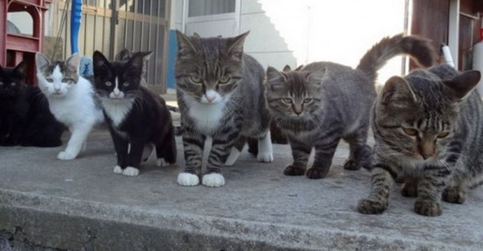 Japan Has Two Islands That Are Overrun by Domestic Cats