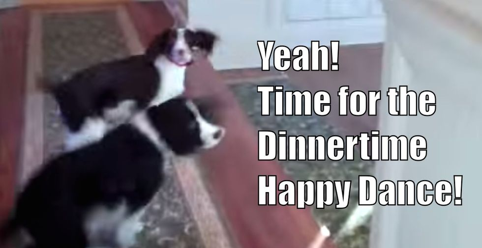 Dogs excitedly spin in circles while their owner sings them their dinnertime song