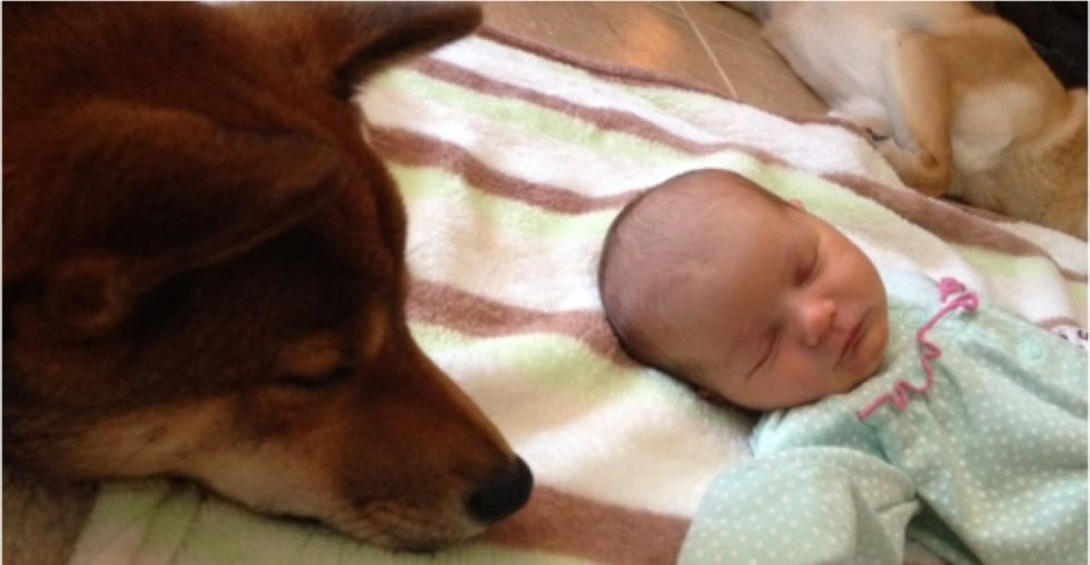 Loyal dog is now the constant companion and guardian of his new 2-week-old master