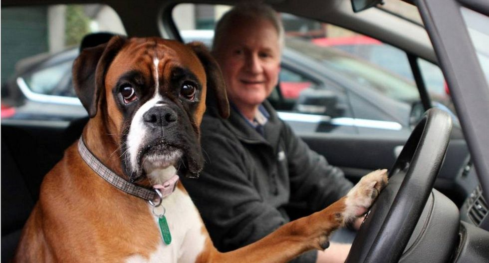 Couple leaves their dog in the car, she honks the horn until they come back