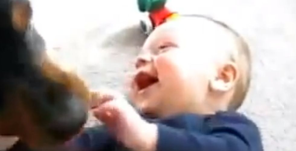 This compilation of babies laughing hysterically at dogs is almost too much