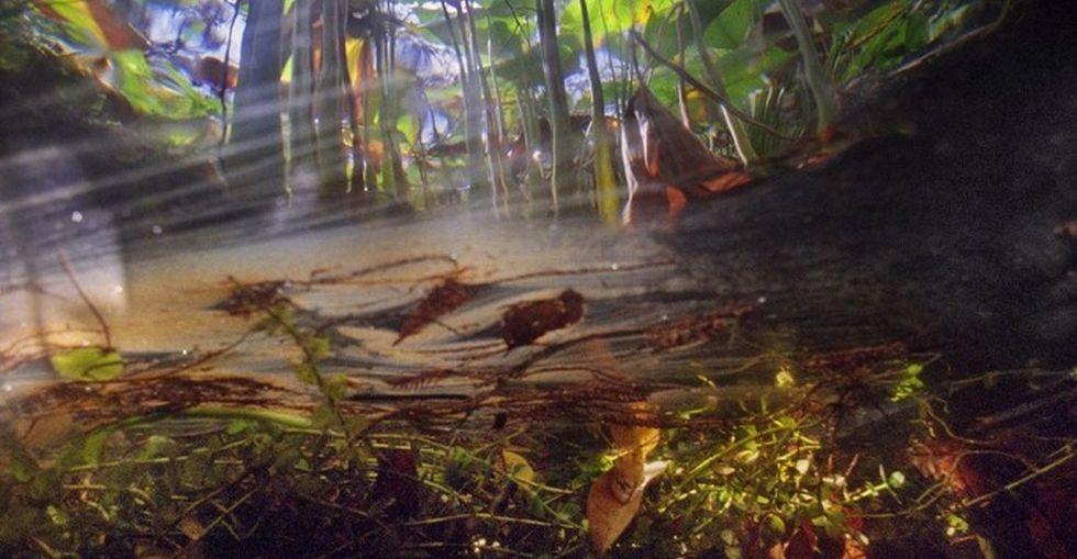 Untrained underwater photographer snaps amazing pics from beneath Florida's swamps