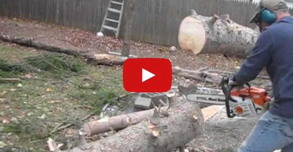 Fallen tree stands back up in a powerful protest against getting chopped to pieces