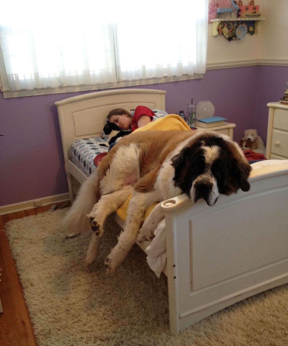 30 HUGE Dogs That Have No Idea How Big They Are. Hilariously Adorable...