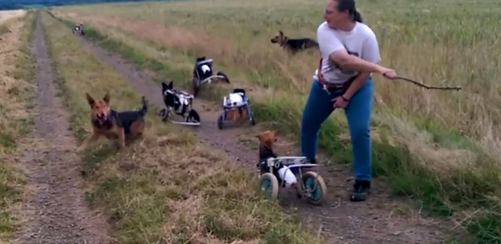 Watching 5 paralyzed dogs play fetch using wheelchairs will make you almost as happy as they are