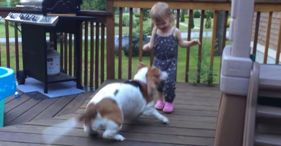 Adorable toddler dances with her Basset Hound. Her giggle says it all...