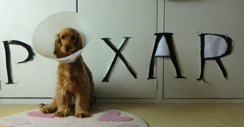 18 People Who Knew Exactly What To Do With Their Dog's Cone of Shame