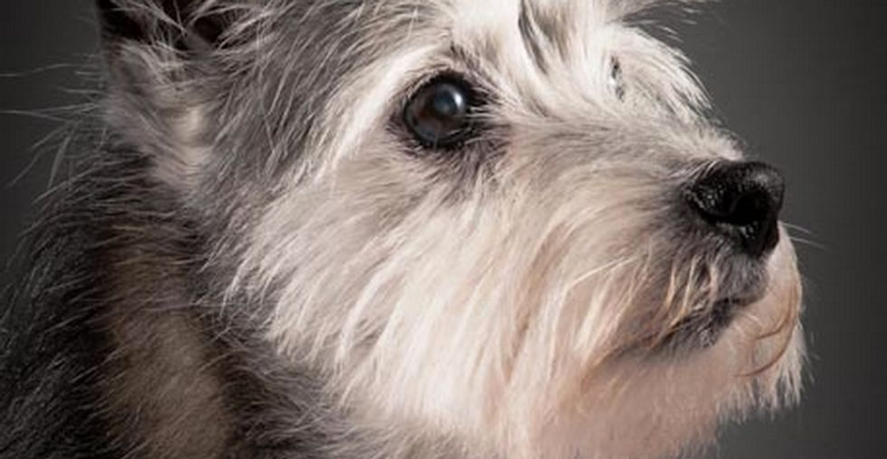 This Is What a Faithful Friend Looks Like — Heartwarming Portraits of Elderly Dogs...