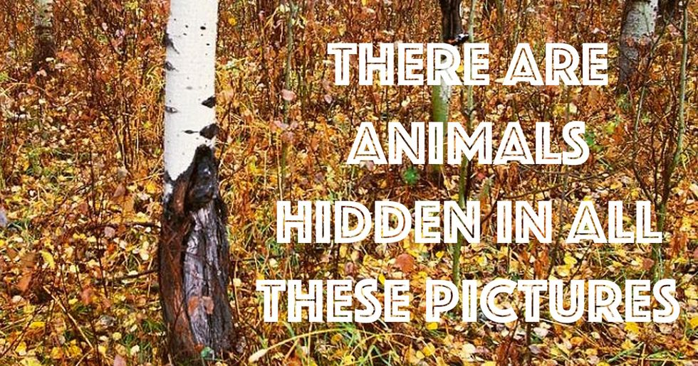 Most People Can't Find the Animals Hidden In These Nature Photos. Can You?