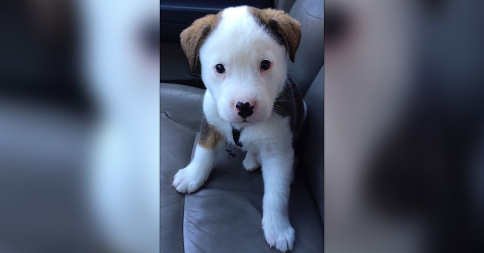 Puppy is Adorably Baffled By His Hiccups And Thinks It's Something Inside Him