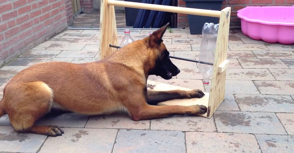 This Awesome Homemade Machine Could Be Your Dog's Favorite New Toy