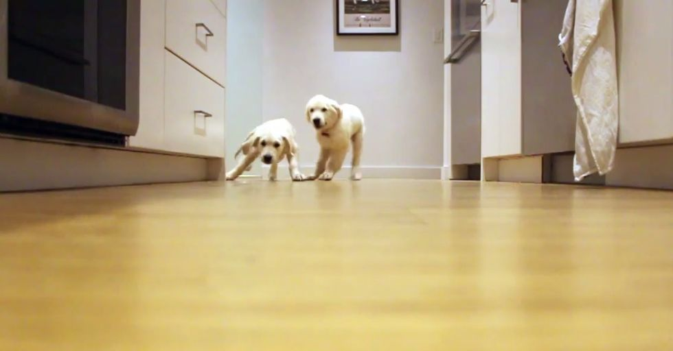 Two Puppies Sprint for Their Food Every Week as They Grow Up in This Awesome Timelapse