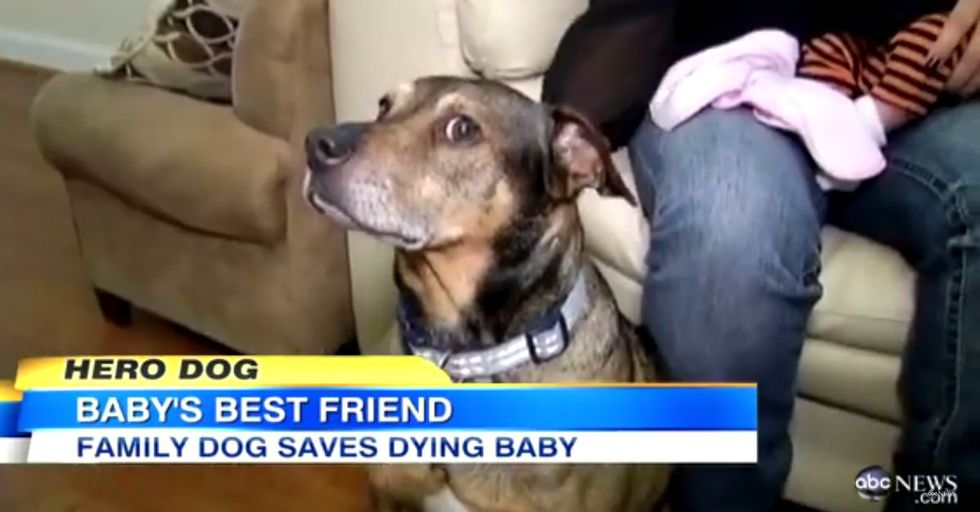 Family's Rescue Dog Becomes A Hero After Saving Their Baby's Life