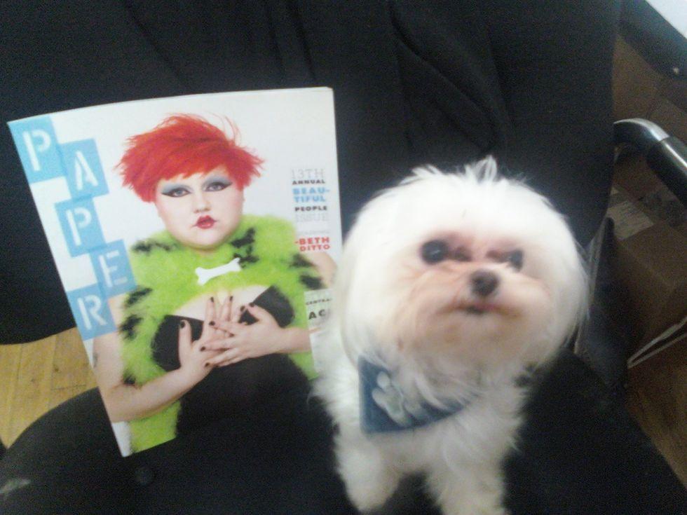 Pets on Paper: Meet Wylie!