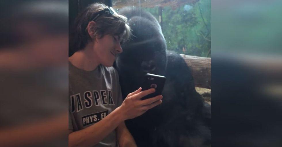 Gorilla Has AMAZING Reaction To Photos of Other Gorillas