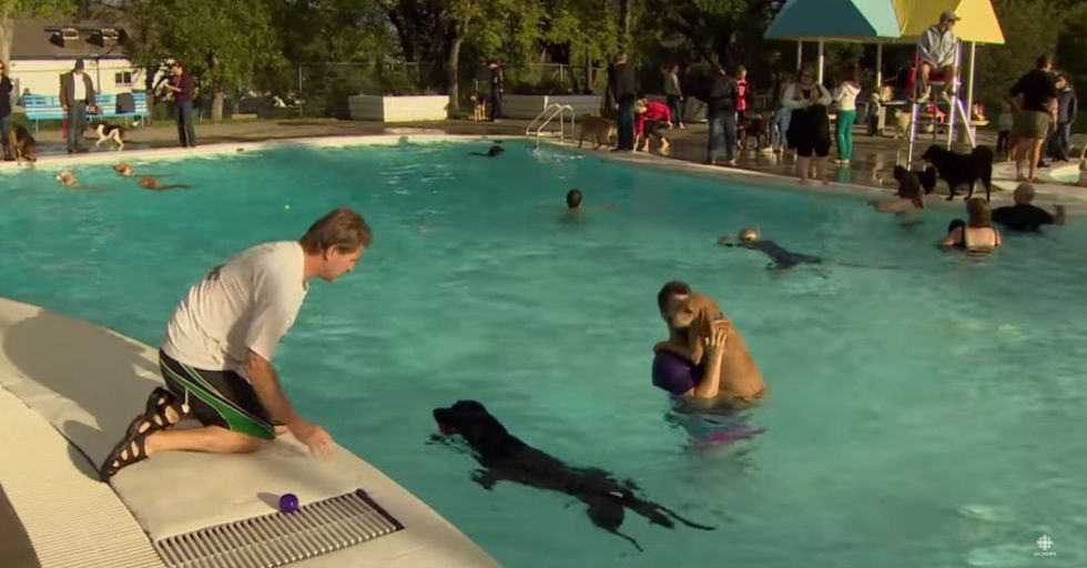 On the Last Day of Summer, Dogs Get To Swim In This Public Pool