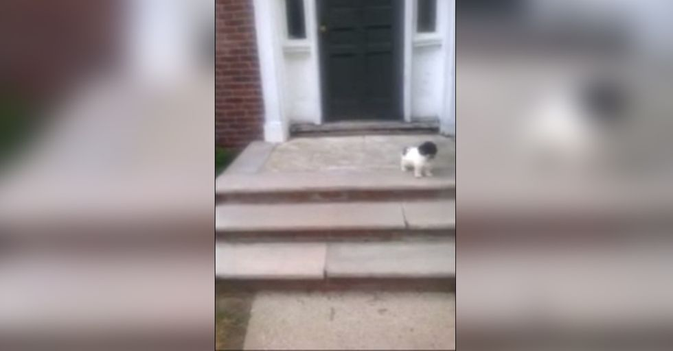 Hilariously Adorable Dog Would Rather Jump Into the Bush Than Go Down the Stairs