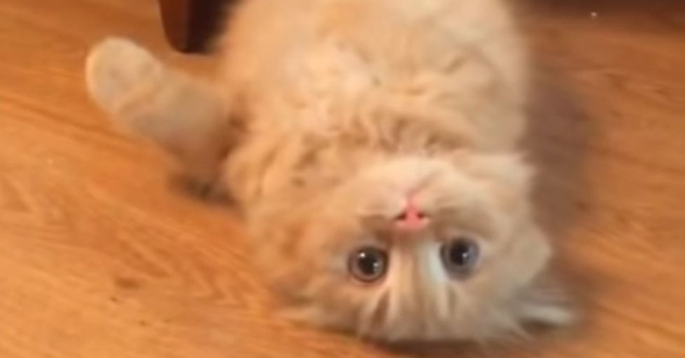 Nobody Expects...UPSIDE DOWN CAT