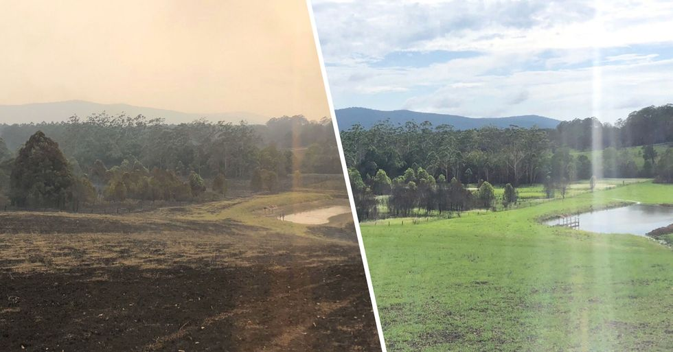 Incredible Impact Rain Has Had on Bushfire Areas Shown in Before and After Pictures