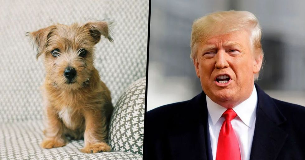 Donald Trump Makes Animal Cruelty a Federal Felony