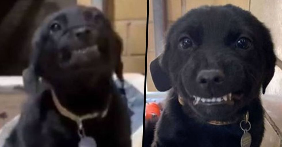 Adorable Puppy Who Went Viral for His Wide Smile Finds Forever Home