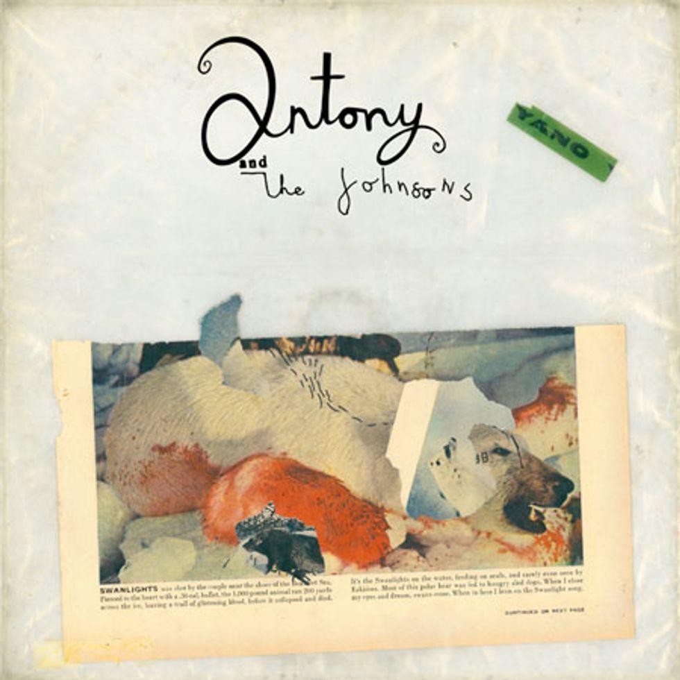 Peter Davis' Status Update: Antony's Art + Music