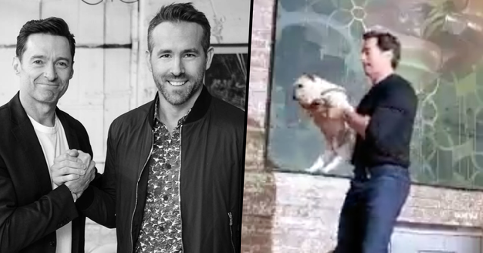 Ryan Reynolds Apologizes for Calling Hugh Jackman a 'Monster' Over Video of His Dog