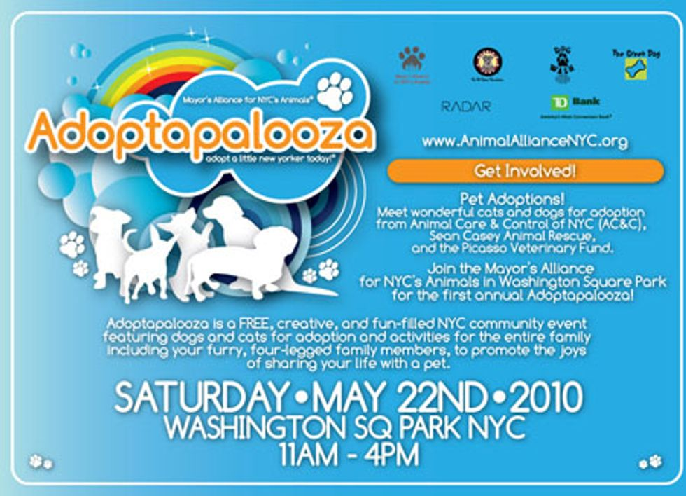 Adoptapalooza Has Just the Furry Friend for You!