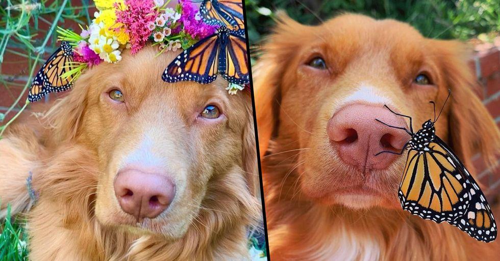 Dog Befriends All the Butterflies That Live in His Garden