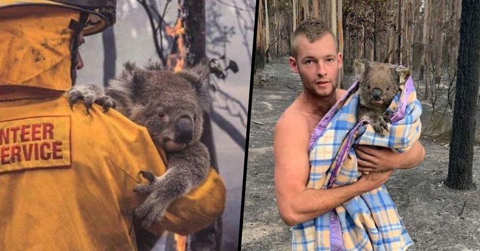 Touching Photos of Animals Being Saved From Australian Bushfires Rage Show the Very Best of Humanity
