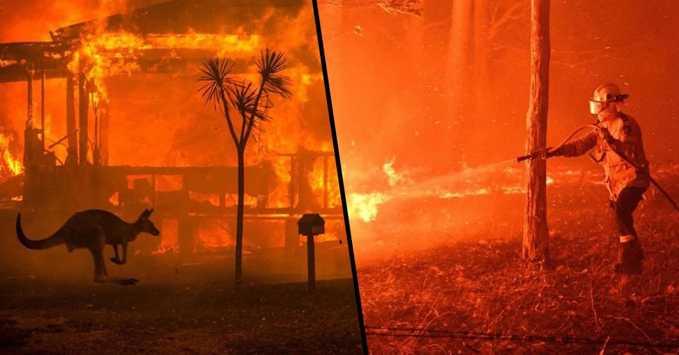 Almost Half a Billion Animals Have Died in Australian Bushfires Since September
