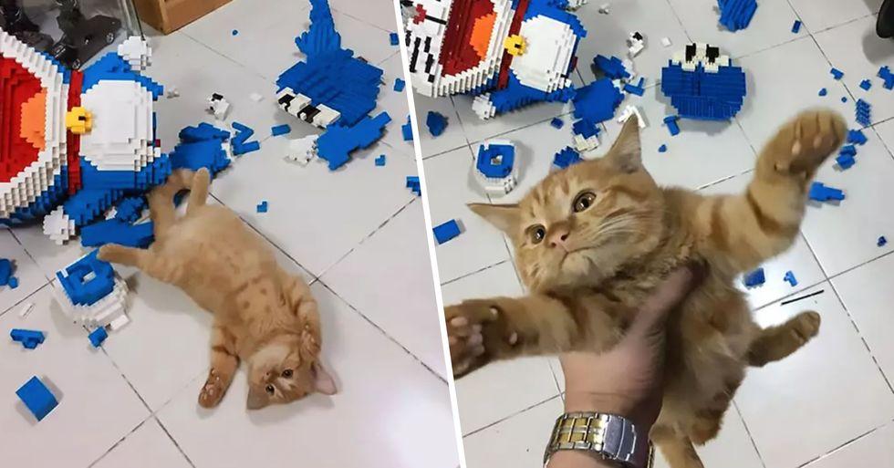 Cat Destroys 2,432 Piece Model Owner Spent a Week Building