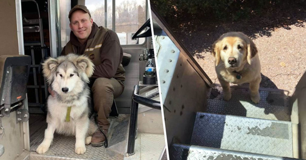 UPS Drivers Have a Facebook Group About Dogs They Meet on Their Routes and It's Adorable