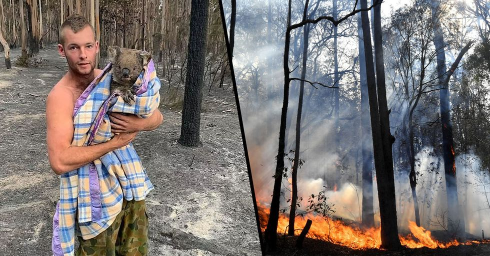 Hero Saves Nine Koalas After Going on Dangerous Mission Into Fire-Ravaged Area