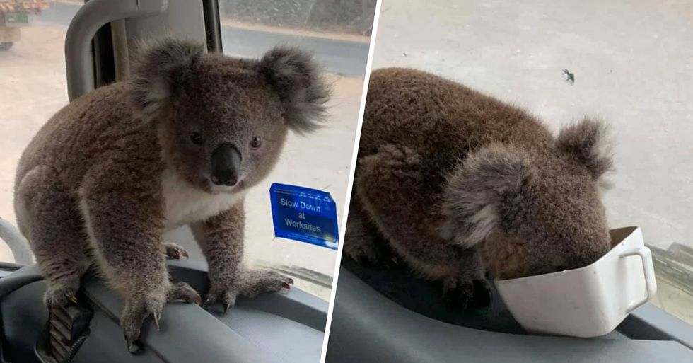 Tiny Koala Brings a Smile to a Truck Driver's Face as Fires Devastate Australian Communities