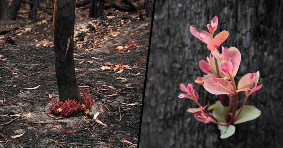 Australian Bush Comes Back to Life Just Weeks After Being Destroyed by Fires