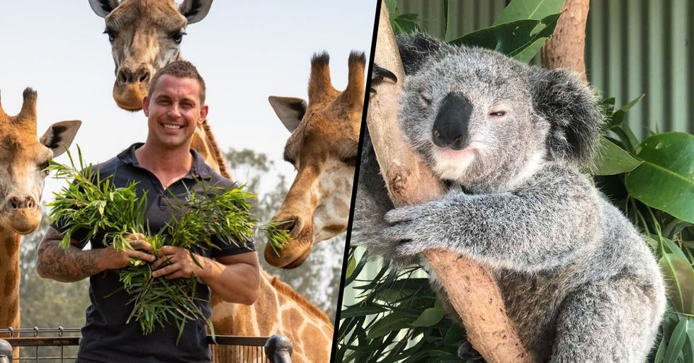 Owner of Aussie Zoo Risked His Life to Save Animals as Raging Fire Drew Close to Enclosures