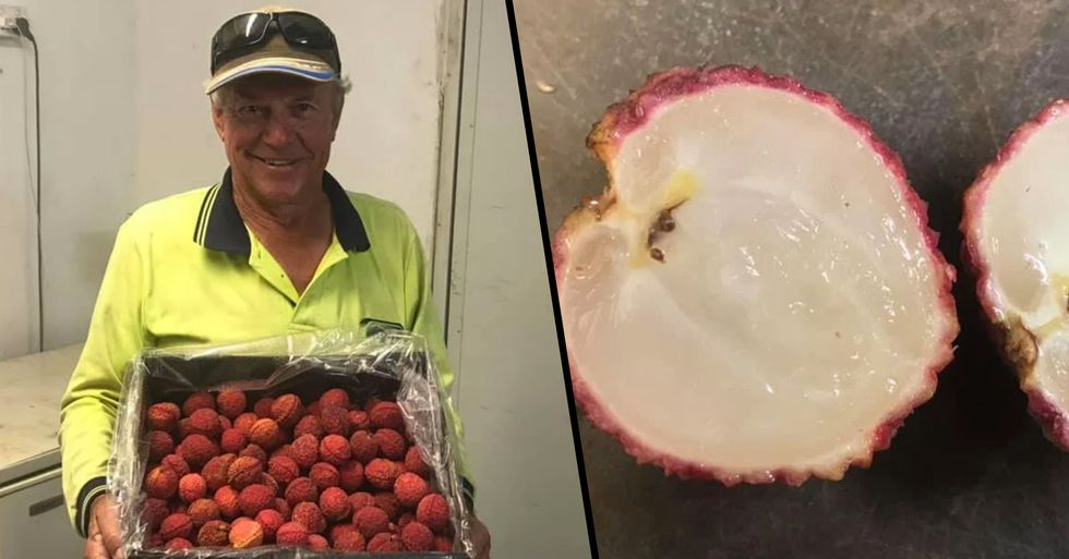 Farmer Grows Seedless Lychees After 20 Years of Hard Work