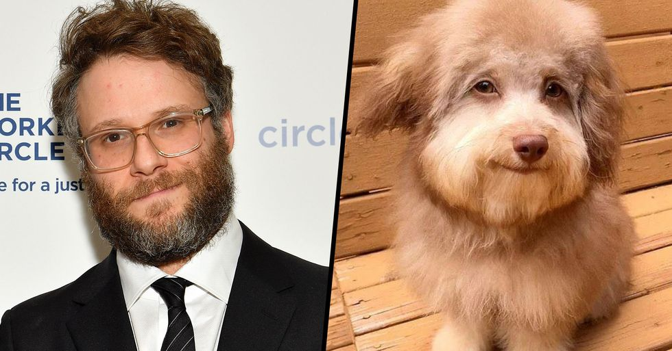 Seth Rogen Responds to People Thinking He Looks Just Like This Dog