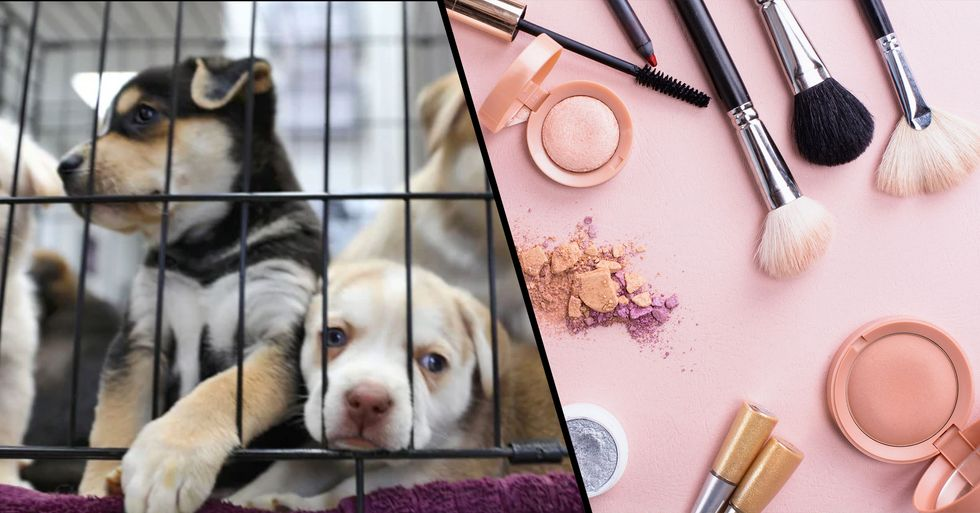 California Just Became the First State to Ban the Sale of Products Tested on Animals