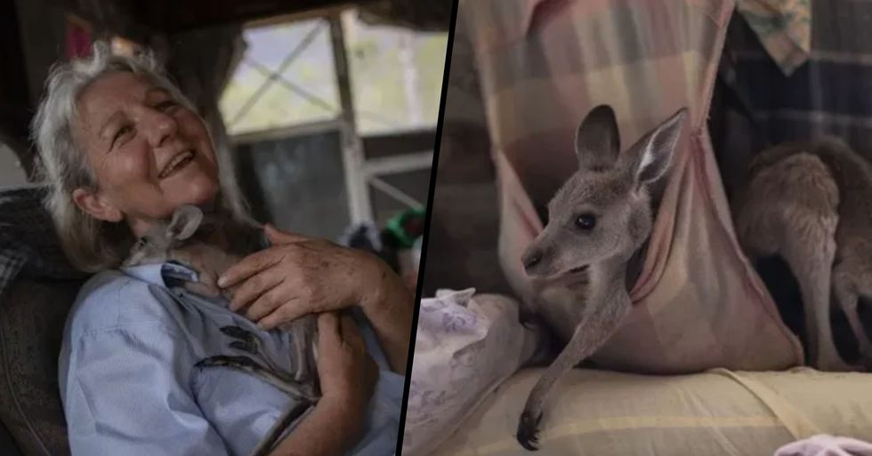 Couple Take in 60 Kangaroos and Make Pouches out of Sheets for Them