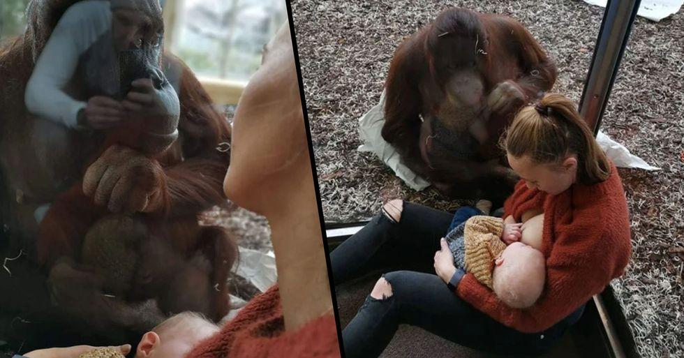 Breastfeeding Mom's Emotional Encounter With Orangutan Goes Viral
