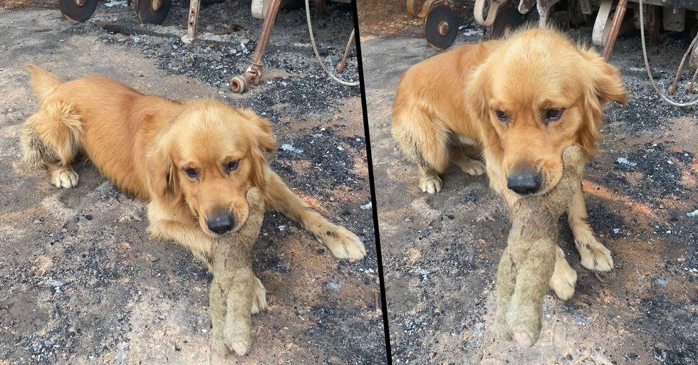 Dog Finds Favorite Toy in Rubble of Australia Bushfires